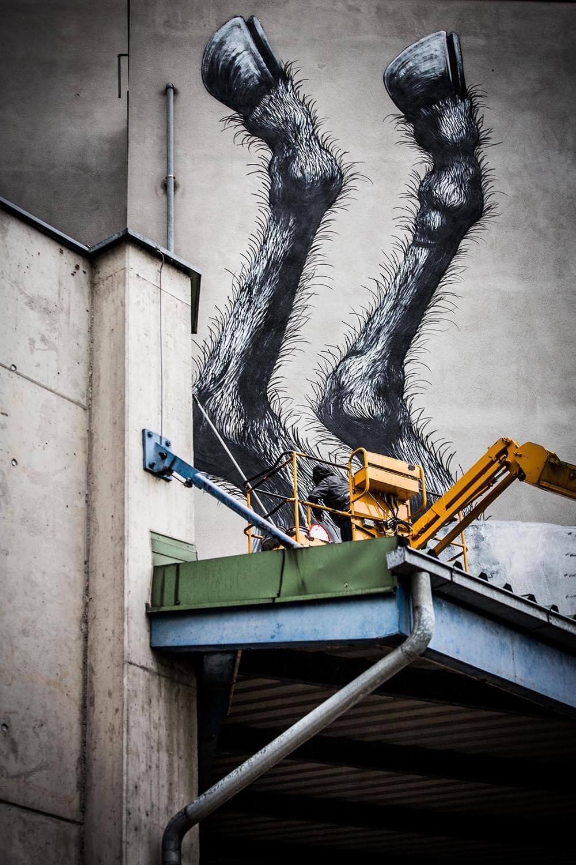 mural harbor linz graffiti roa flap photography fotograf philipp greindl photographer linz austria streetart